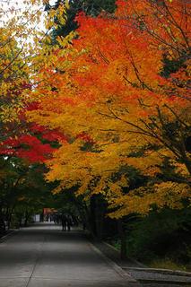 20061118-tofukuji-02.jpg