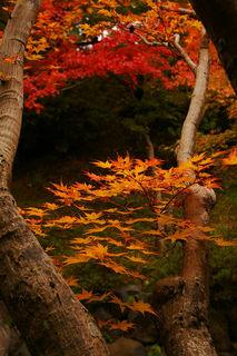 20061118-tofukuji-04.jpg
