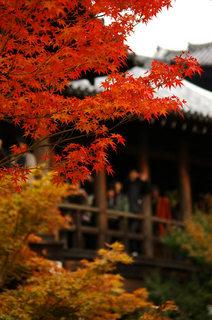 20061118-tofukuji-05.jpg
