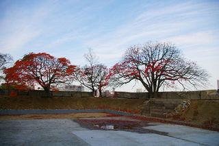 20061129-osaka-castle-2.jpg