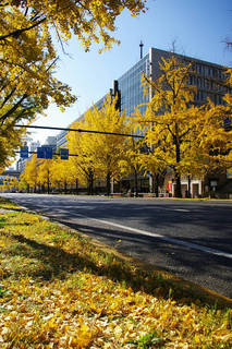 20061203-Midosuji-autumn01.jpg