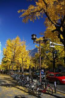 20061203-Midosuji-autumn02.jpg