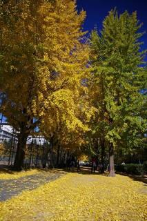 20061203-ShimoFukushimaPark03.jpg