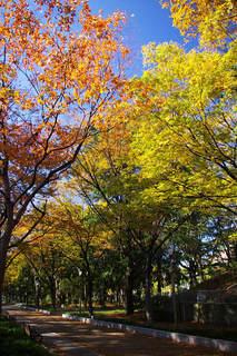 20061203-UtsuboPark-autumn01.jpg