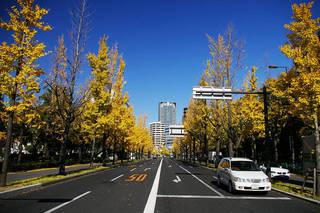 20061203-UtsuboPark-autumn03.jpg