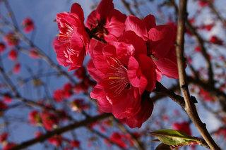 20070304-peach02.jpg