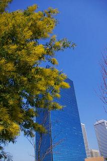 20070307-mimoza02-2006.jpg