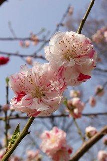 20070328-peach.jpg