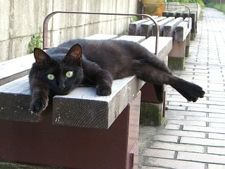 20070718-cat01.jpg