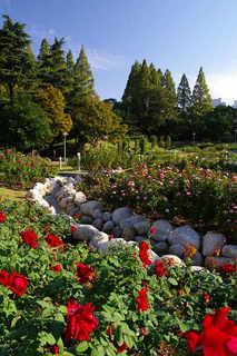 20071022-garden.jpg