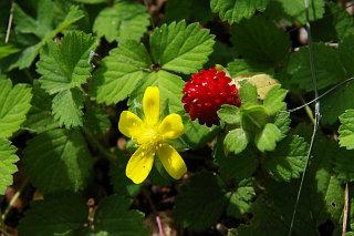 20071101-berry.jpg