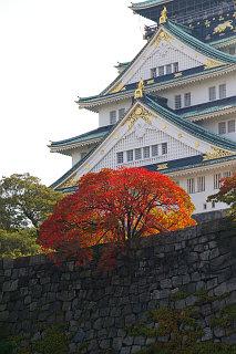 20071114-hazenoki01.jpg