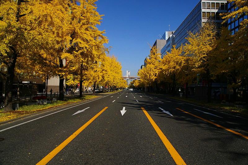 20071201-midousuji01.jpg