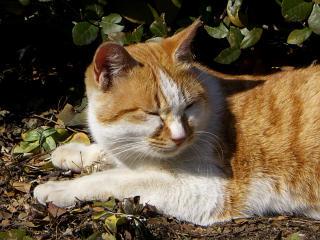 20080215-cat.jpg