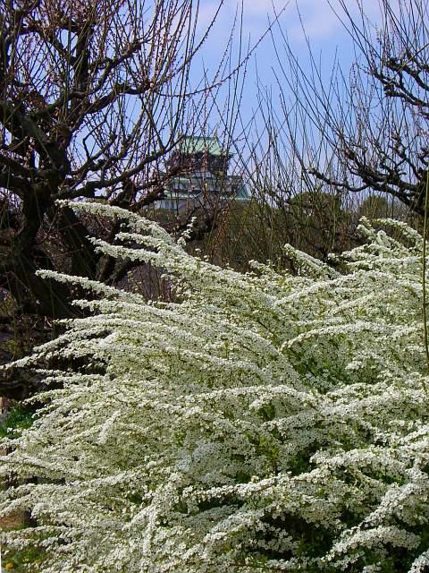 20080328-yukiyanagi01.jpg