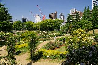 20080506-utsubo-park.jpg