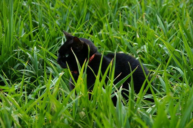 20081004-cat.jpg