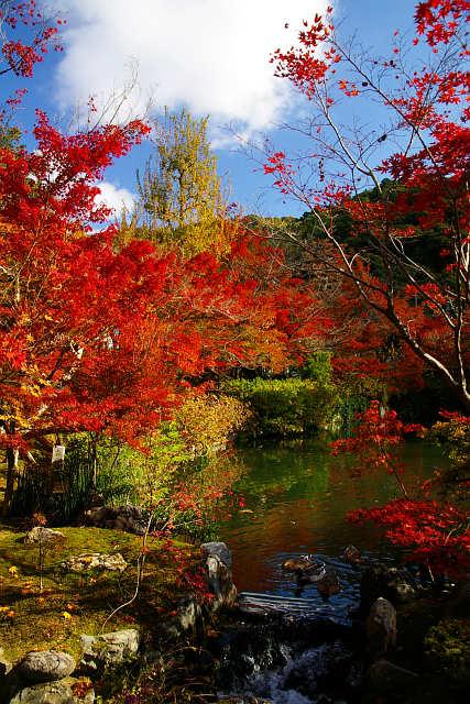 20081122-eikando01.jpg