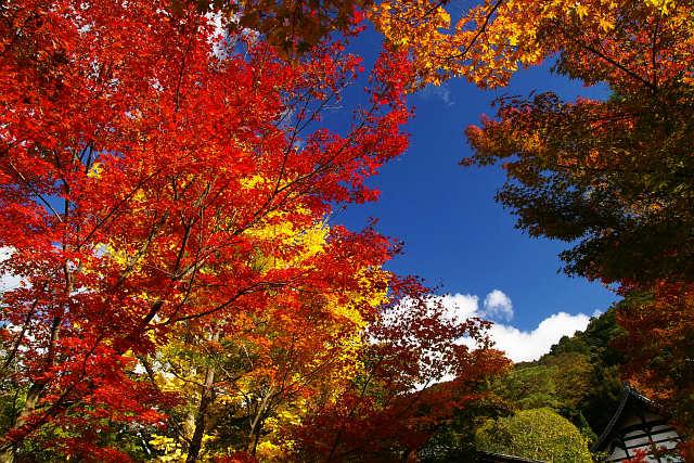 20081122-eikando05.jpg