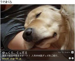 20081123-youtube1.jpg