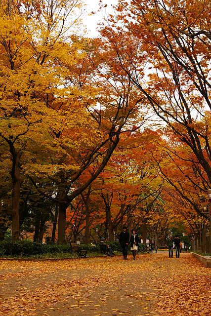 20081129-utsubo-namiki.jpg