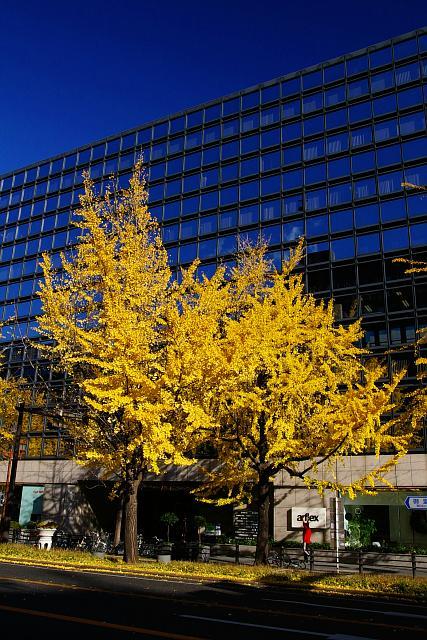 20081207-midousuji02.jpg
