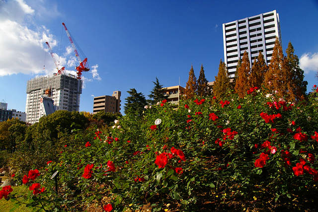 20081207-utsubopark.jpg