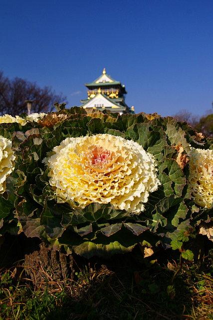 20090117-botan-castle.jpg
