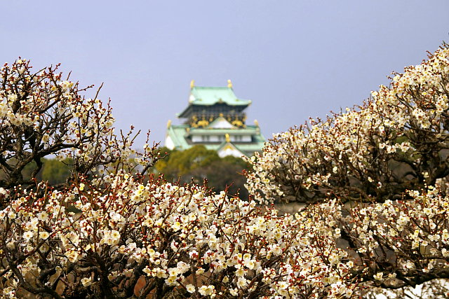 20090211-plum-castle02.jpg