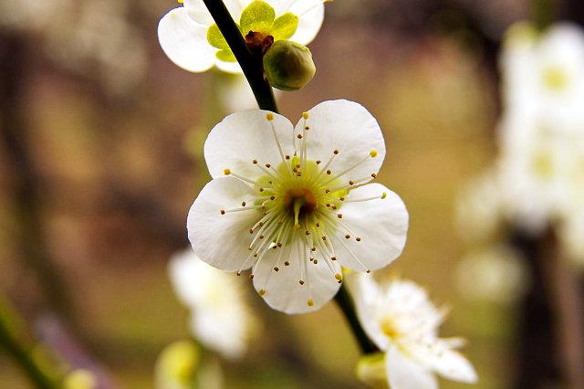 20090211-plum-ryoku01.jpg