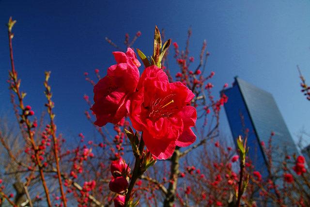 20090301-peach01.jpg