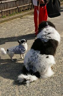 20090307-dog-big-small.jpg