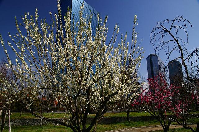 20090315-peach05.jpg