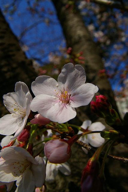 20090329-tosainari01.jpg