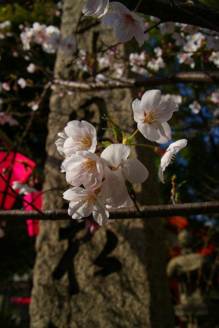 20090329-tosainari02.jpg