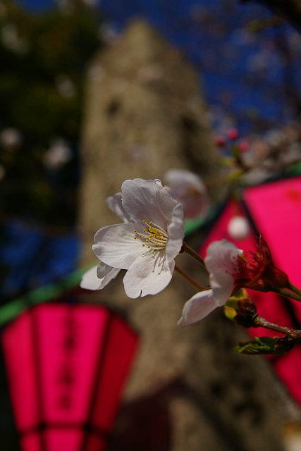 20090329-tosainari03.jpg