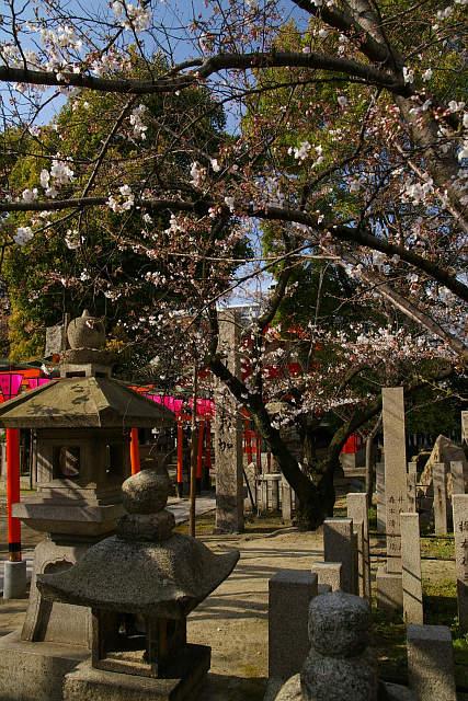 20090329-tosainari04.jpg