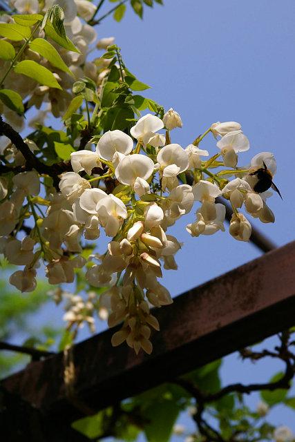 20090429-fuji06.jpg