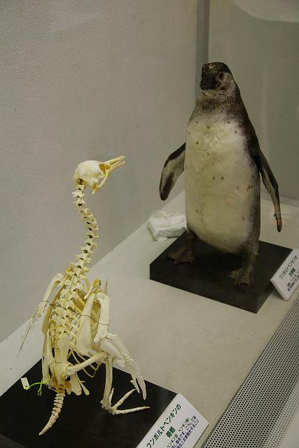 20090606-penguin.jpg