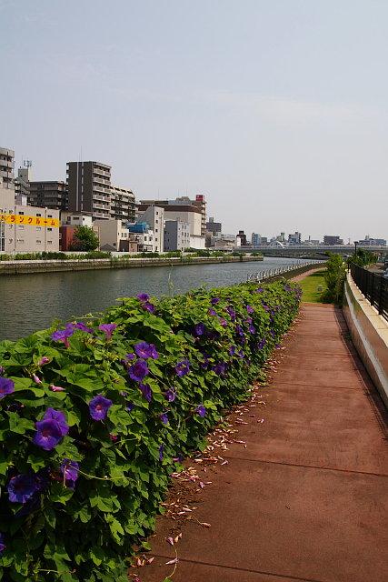 20090705-kidugawa-promenade.jpg